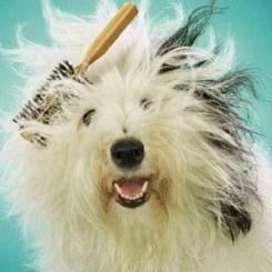 Dog grooming Gloucester