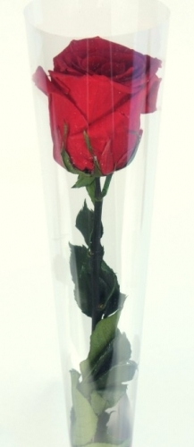 Single Red Rose. 10.