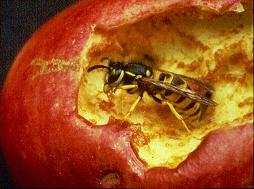 Pests killed