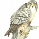 Merlin Pet Supplies