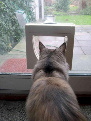 Cat Flaps Fitted throughout London