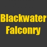 Blackwater Falconry - pest service