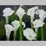 Conservatory Florist