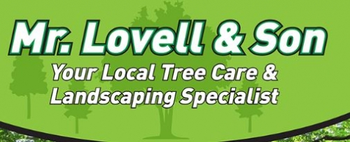 Tree Surgeons in Swindon