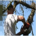 Clive Richards Tree Surgeons