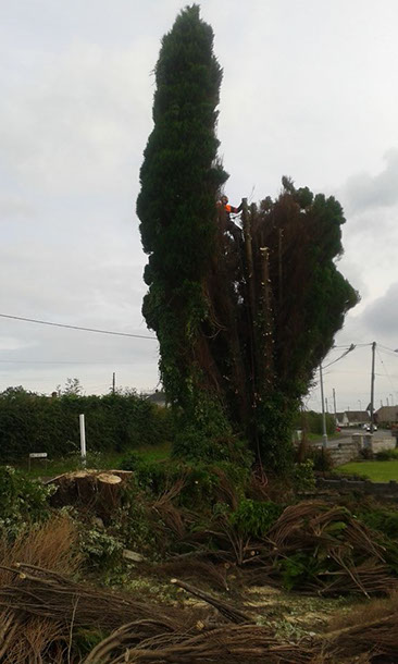 DAVES TREE & GARDEN SERVICES DOMESTIC & COMMERCIAL TREE SURGERY & LANDSCAPING SERVICES
