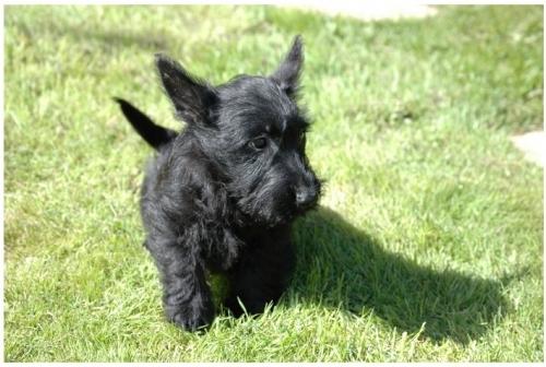 Dog Kennels Clitheroe