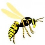 Wasps Landscaping