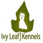 IVY Leaf Kennels