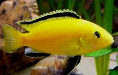 Mr Cichlids  UK-07891515801