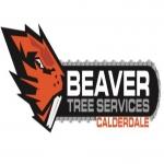 Beaver Tree Services Calderdale Ltd