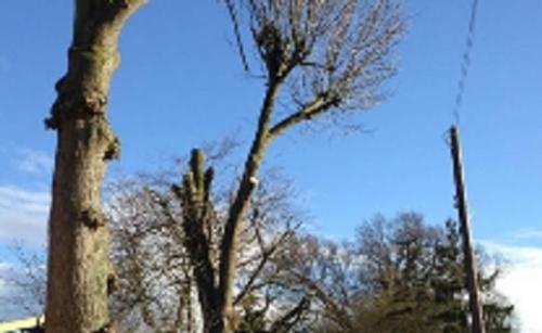 Alder Tree Services 2