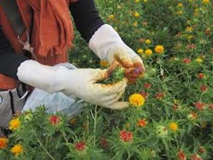 Gardeners Earlsfield