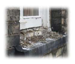 Bird Foul Breathing dust or water droplets containing contaminated bird droppings can lead to several diseases including:      Psittacosis – this is a rare infectious disease caused by a bacterium called Chlamydia psittaci. It is mainly associated with pa