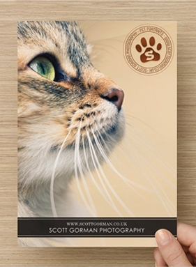 Scott Gorman Photography Pet Portraits Cat Flyer