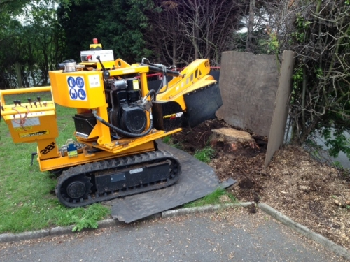 Stump Grinding / Stump Removal