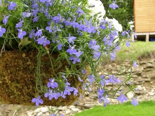 Hanging Basket And Wall At Hopes Edge Holiday Cottage And Bed And Breakfast