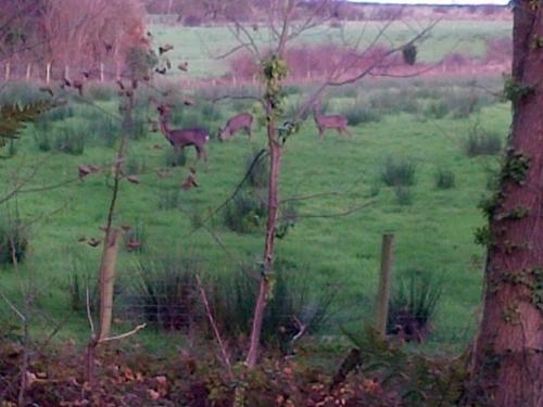 Spot the local wildlife