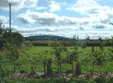 We have views of The Wrekin