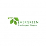 Evergreen Tree Surgeon Glasgow