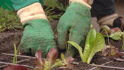 Gardeners Slough