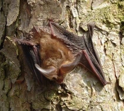 Bats April05 18