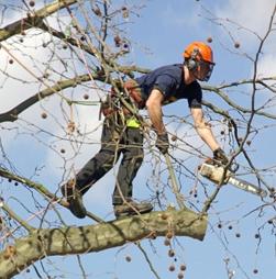 281047 Tree Surgeon Basingstoke Hampshire Treetops Tree Surgeons Ltd Tree Work